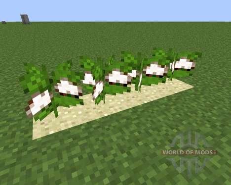 Desert Cotton Mod für Minecraft