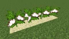 Desert Cotton Mod pour Minecraft