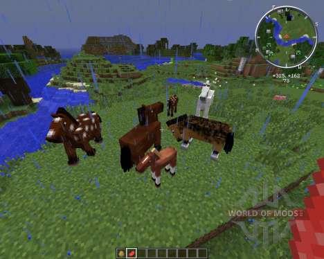 FinndusFillies pour Minecraft