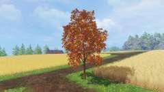 Arbres de l'automne