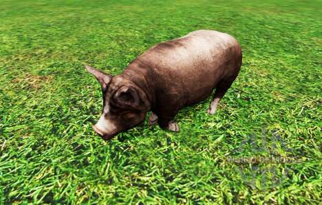 Animals pour Farming Simulator 2015