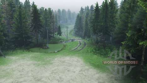 Kiefernwald 2 für Spin Tires