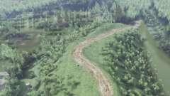 Forêt de bouleaux