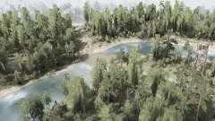 La forêt 1