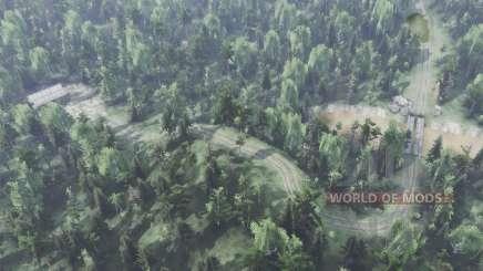 Großer Wald für Spin Tires